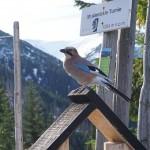 ptaki po niemiecku (2)