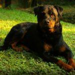 Pies-w-Niemczech
